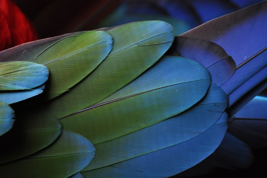 2015_05_Life-of-Pix-free-stock-photos-parrot-feather-green-blue-photostockeditor